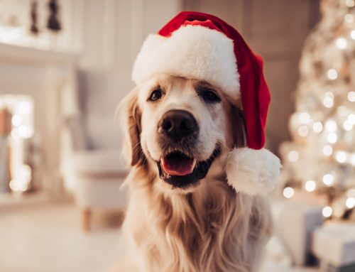 5 Pawliday Pet Hazards to Avoid
