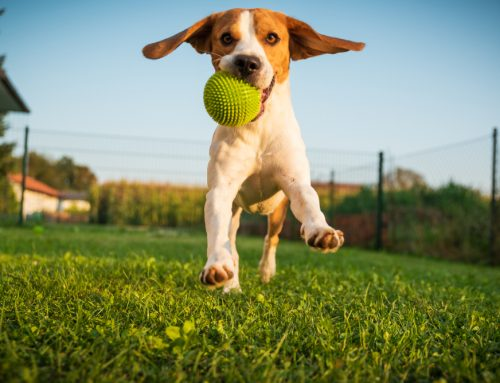 "From Couch ""Paw""tato to Four-Legged Athlete: How to Stay Active with Your Pet"